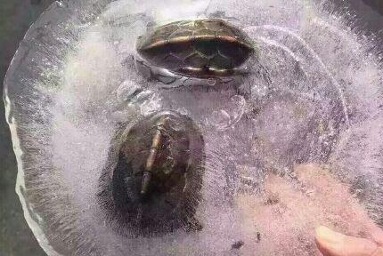 串珠子乌龟步骤图解