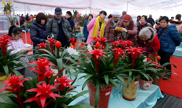 武漢:選購鮮花迎春節