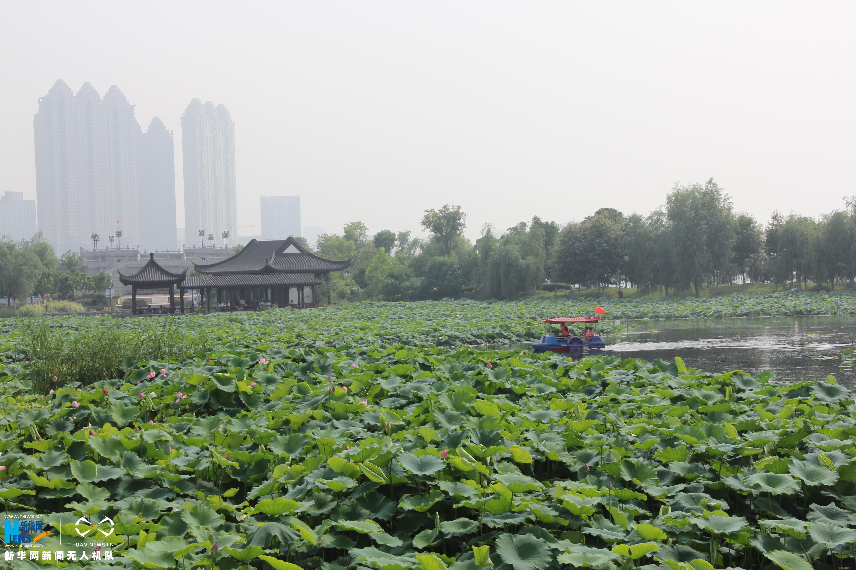 航拍武漢沙湖公園