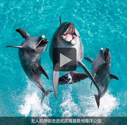 航拍武漢海昌極地海洋公園