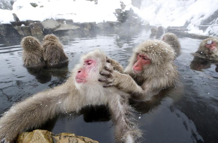 已發布你泡的溫泉,有可能只是換了個地方洗熱水澡