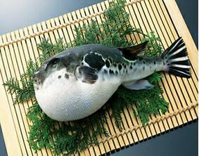 """河豚魚""""解禁"""",你敢吃嗎?"""