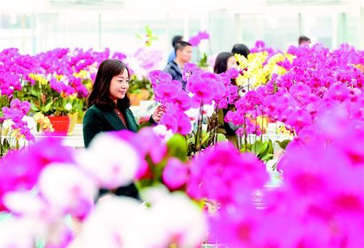 武漢:市民選購鮮花過新年