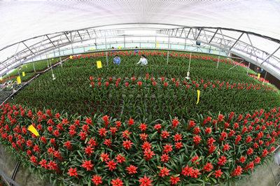 三峡苗圃研究中心培育珍稀特有植物逾万株