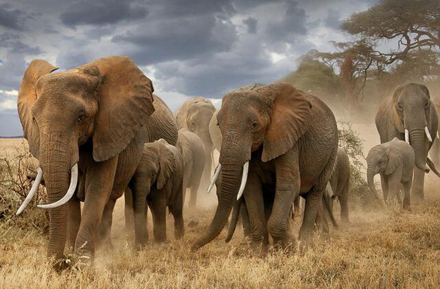 """""""這就是非洲""""喻惠平非洲攝影作品公益展在漢開幕"""