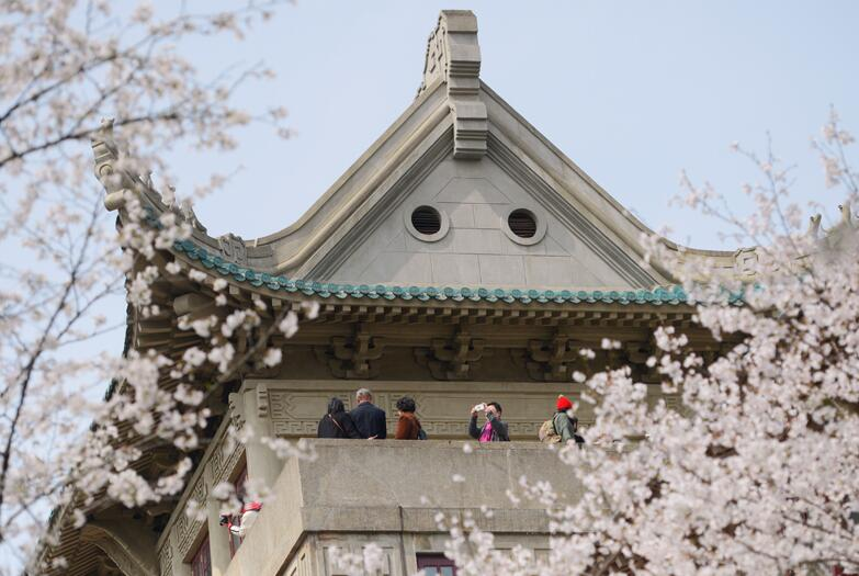 櫻花如雲綻放 武漢大學迎來最美春光