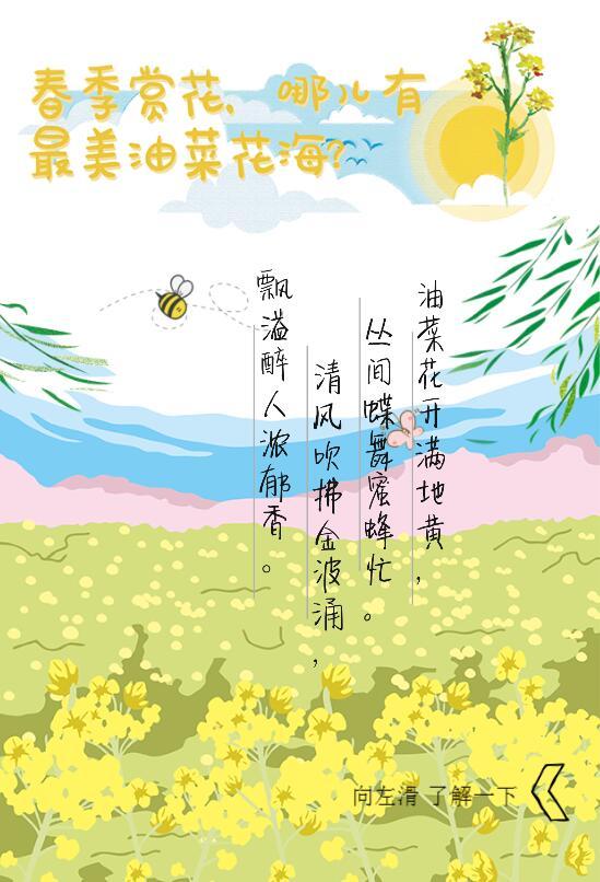 春季賞花,哪兒有最美油菜花海?