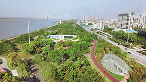 全景感受長江土堤變身生態防洪公園