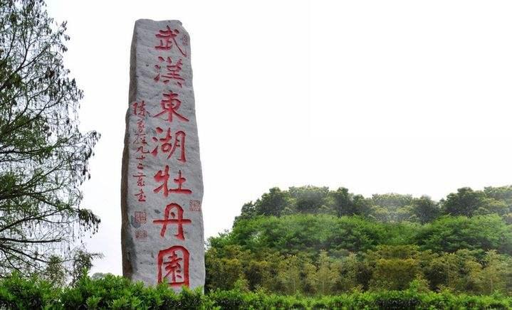 新華VR帶您體驗東湖牡丹園美景