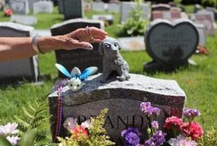 武汉一宠物殡葬公司开在小区惹反感 行业如何规范