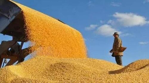 湖北首个国家粮食技术转移中心落户武汉