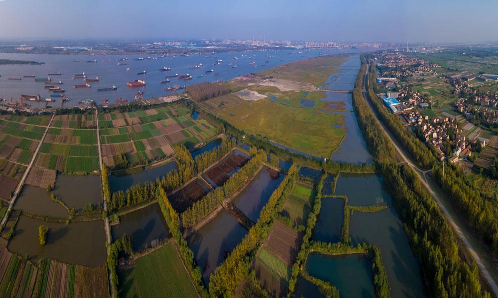 青山區·長江濕地