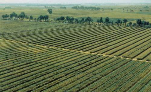 湖北今年第二次補充耕地指標網上交易 總交易金額52.56億元