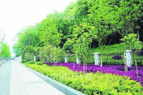 花开三镇 武汉实施十大园林绿化景观提升工程