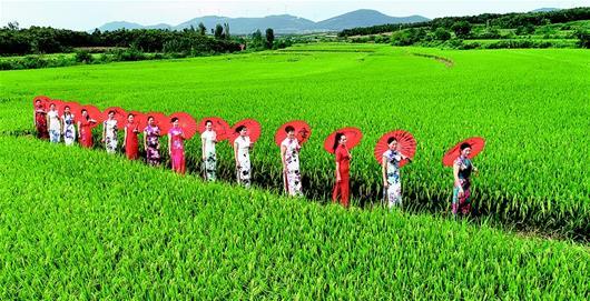 襄陽:稻花香裏的走秀