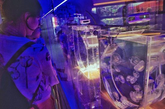 """看水母如何长大 武汉东湖海洋世界新增""""繁育实验室"""""""