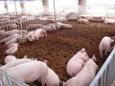 湖北黃梅縣一養豬場污染擾民被處罰
