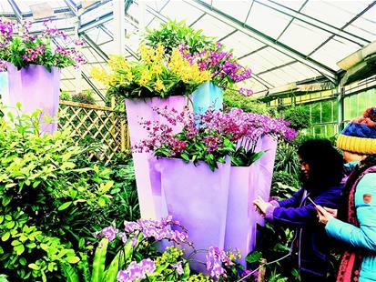 武漢植物園展出熱帶蘭花