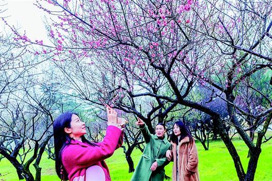 2019武漢東湖梅花節開幕