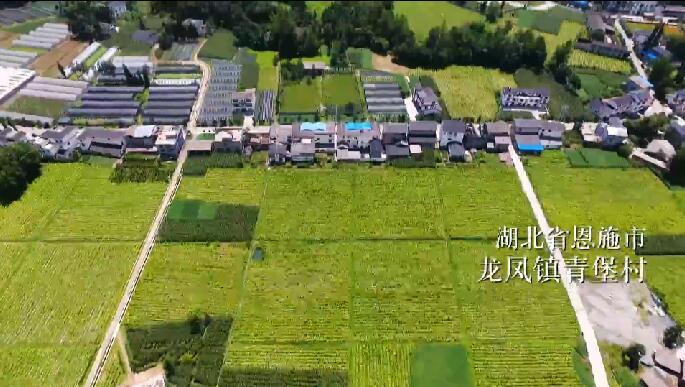 湖北青堡村:找準産業 選對人