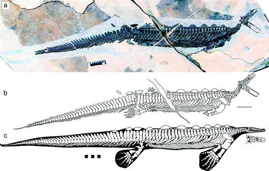 湖北遠安發現2.48億年前類鴨嘴獸化石