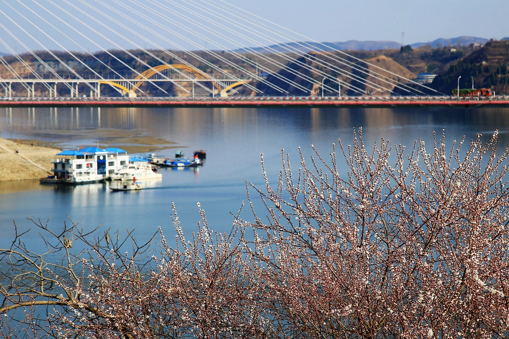 湖北鄖陽:春到漢江畔