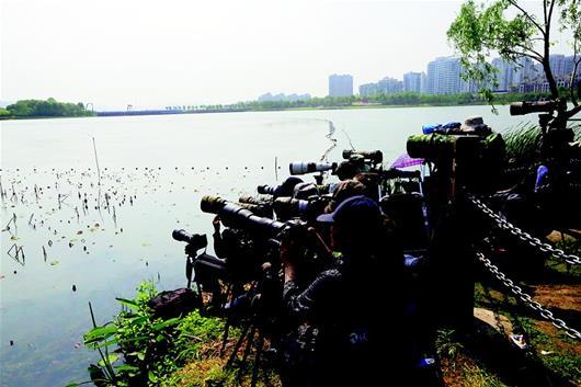 武漢南湖幸福灣公園成觀鳥勝地