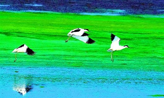 """湖北荊門""""鳥人""""用鏡頭捕捉300余種野生鳥類"""