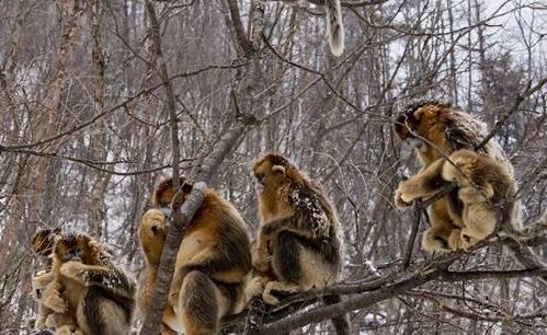 神農架國家公園:從開山伐木到全面保護