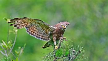 尋找仲夏大美之鳥