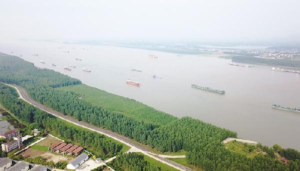 鳥瞰長江監利段綠色堤岸