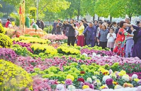 武漢:滿城菊花芬芳鬥艷