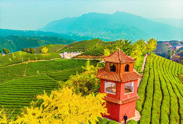 木耳山建成中國最美茶園