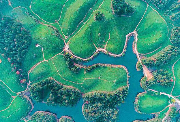 茶産業是鶴峰鄉村振興的最大産業、第一抓手