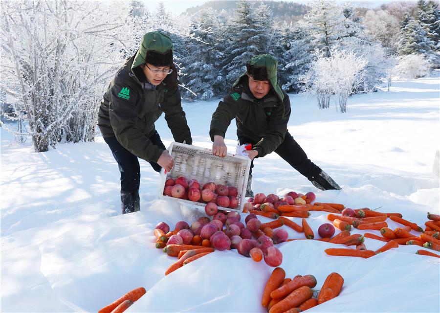 胡蘿卜 玉米 蘋果 都是金絲猴的最愛