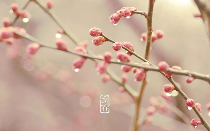 今日立春!一切終將過去,定會春暖花開!
