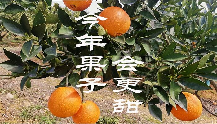 """""""今年果子(zi)會更甜(tian)"""""""