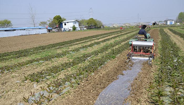 武漢市民4月下旬可吃上東西湖産瓜果