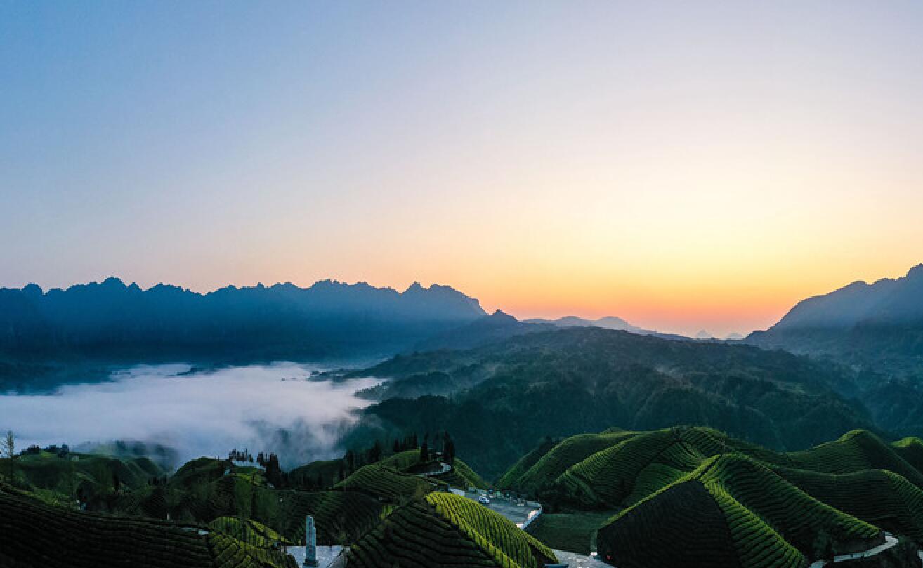 湖北鶴峰:鳥鳴空山茶吐翠 茶園如畫惹人醉