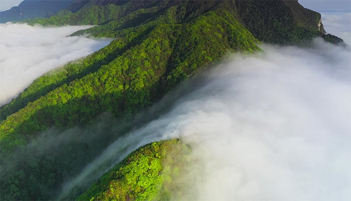 人間仙境!神農架大九湖景區出現罕見雲瀑景觀