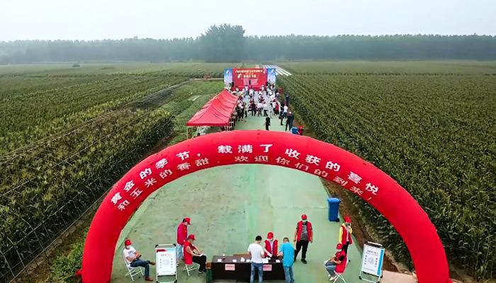 """豐收啦!""""中(zhong)國甜玉米zi) rdquo;開園(yuan)采摘玉米"""