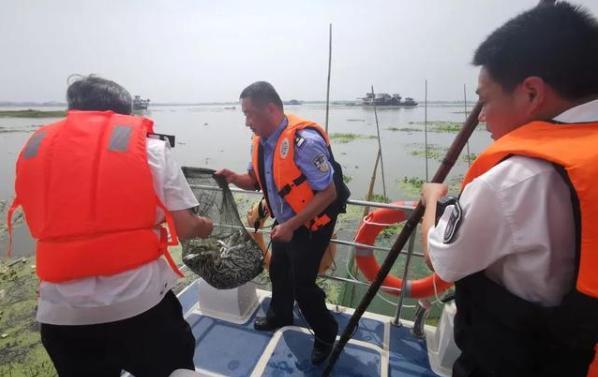湖北:嚴打長江流域非法捕撈違法犯罪