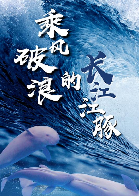 乘風破浪的長江江豚