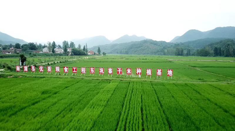 從城裏下鄉創水稻品牌 女種糧大戶帶領村民脫貧致富