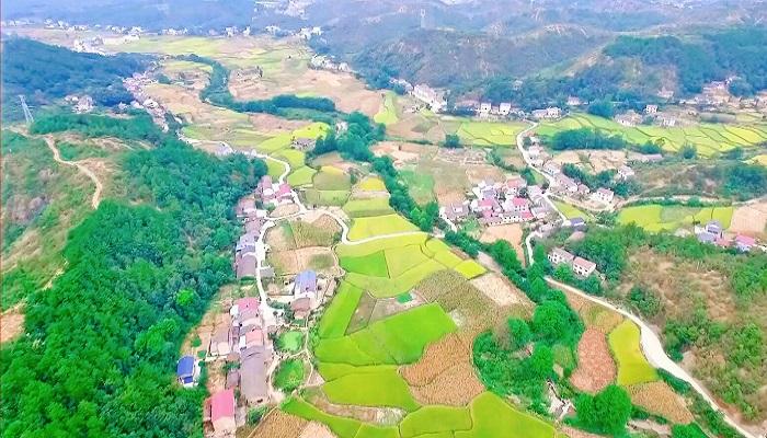 宜昌:峽江山鄉 稻谷金黃