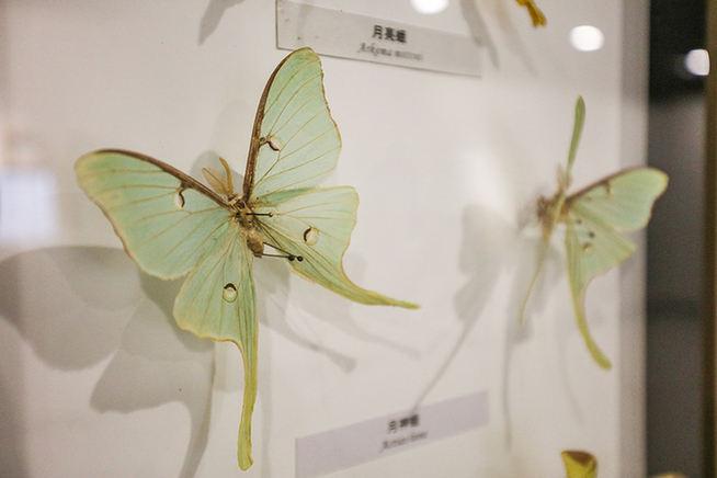 開展了!800多件植物昆蟲標本講述奇趣世界