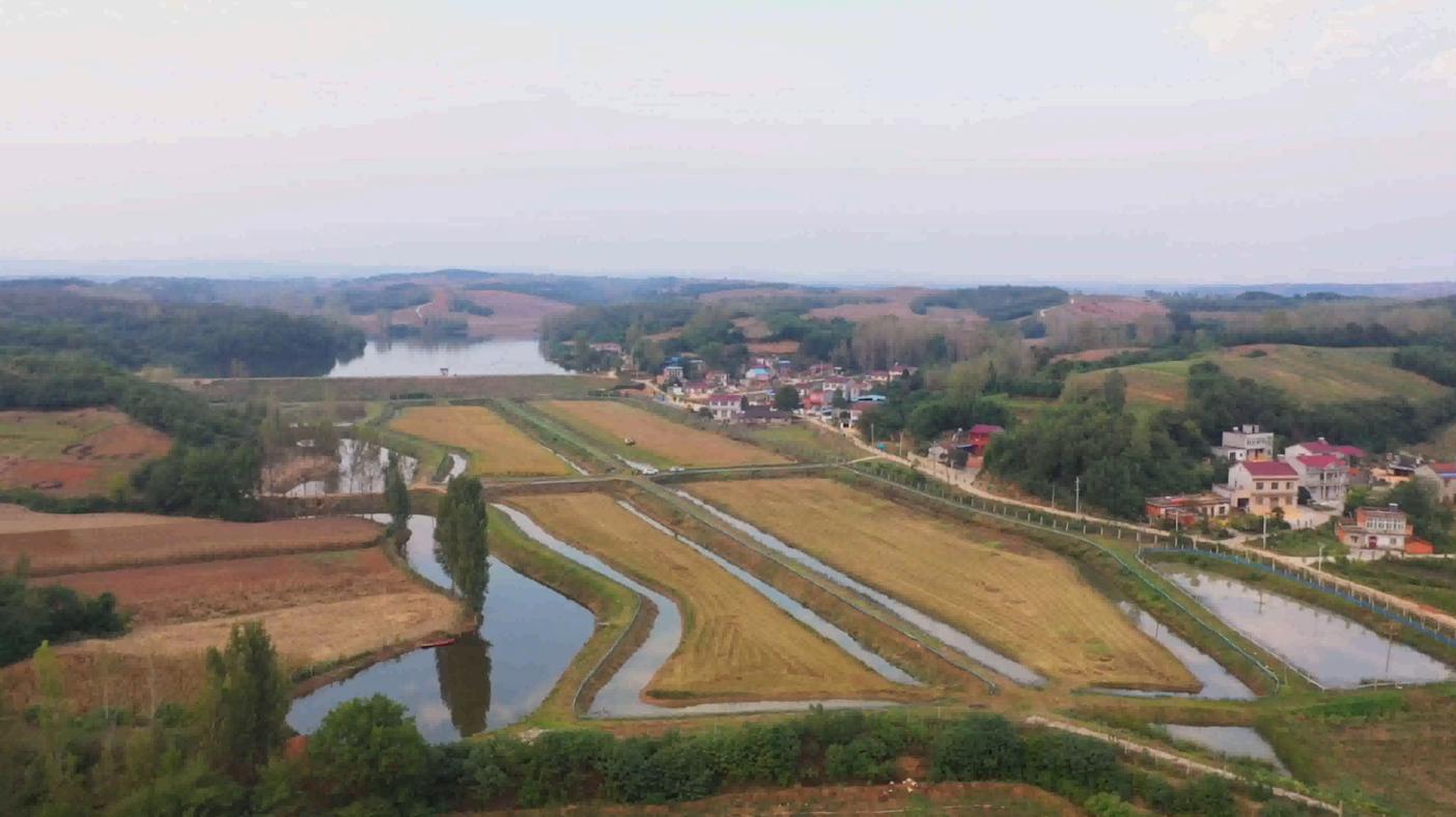 """湖北老河口:稻米豐收蝦蟹肥 """"立體種養""""奔小康"""