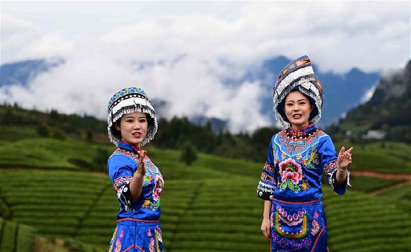 湖北鶴峰:茶旅融合助增收
