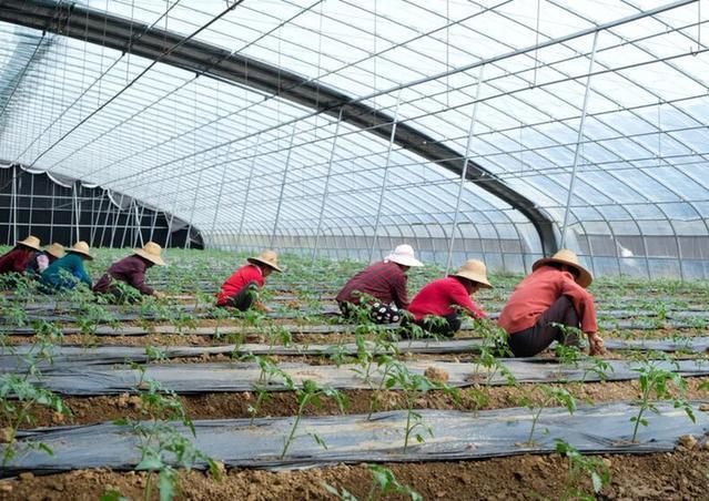 湖北孝感:特色農業裏的脫貧致富經