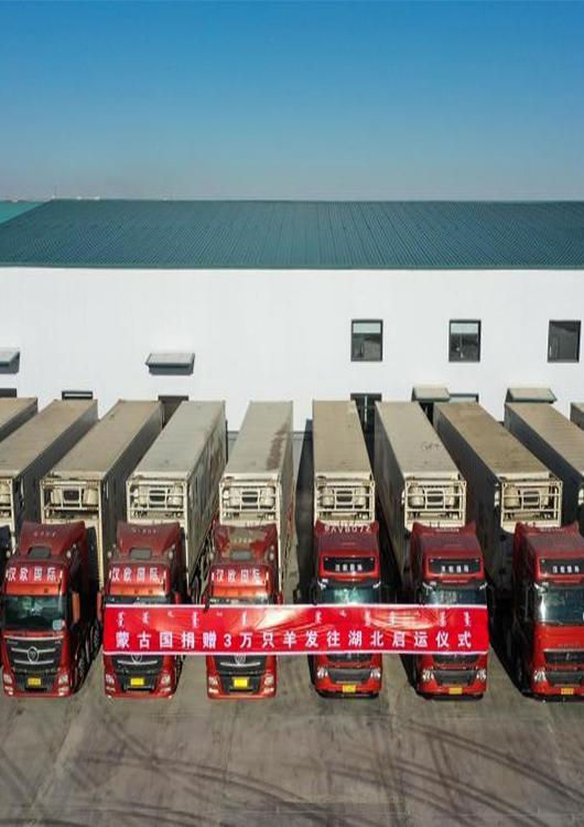 國社觀荊楚   蒙古國的捐贈羊陸續發往武漢